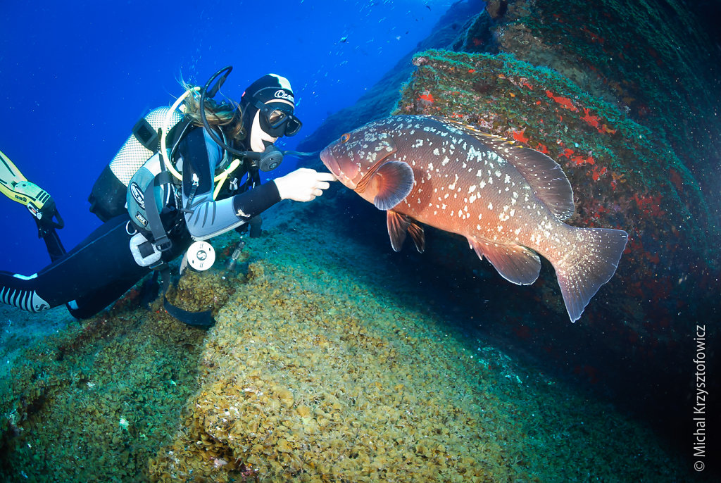 Friendly Grouper