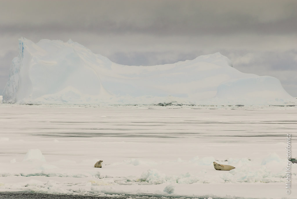 mkrzysztofowicz-20131221-111810-RRS-Ernest-Shackleton.jpg