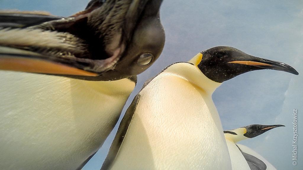 Penguins are inquisitive